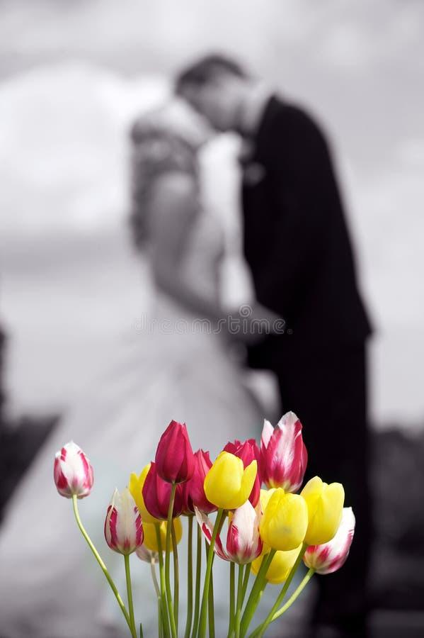 Bacio del tulipano fotografia stock libera da diritti