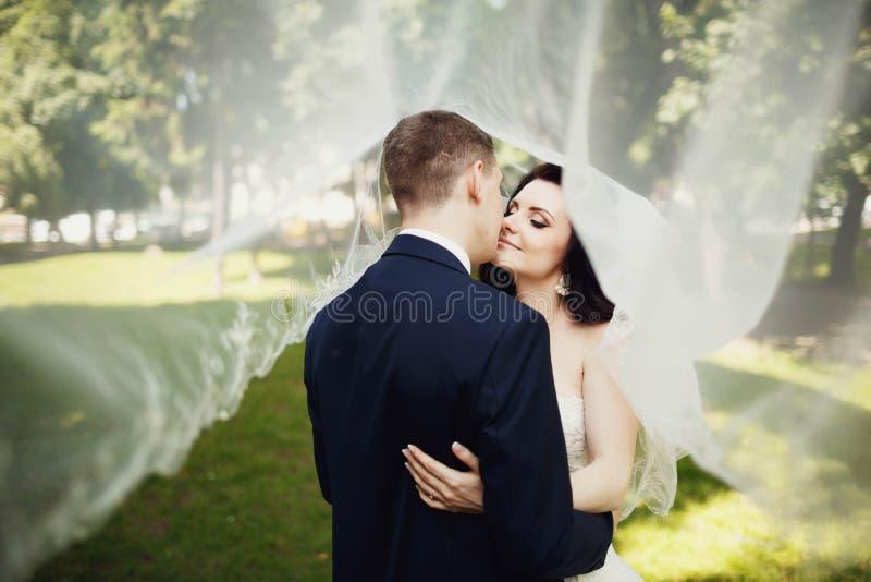 Bacio della sposa e dello sposo eleganti sotto il velo trasparente fotografia stock libera da diritti