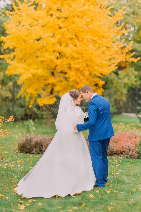 Bacio romantico recentemente della coppia sposata in parco soleggiato Lo sposo sta tenendo delicatamente la sua sposa elegante immagini stock