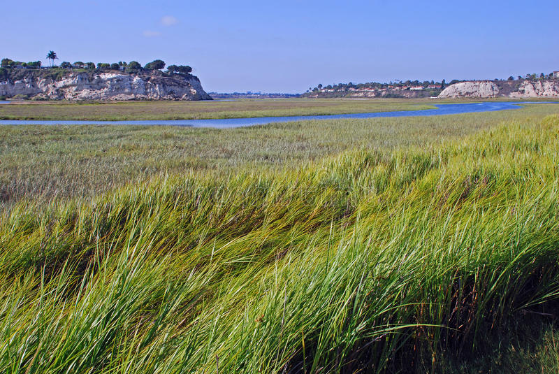 Back bay wetland at Newport Beach California. View of back bay estuary wetland at Newport Beach California. Conservationists helped preserve this area from over royalty free stock photography