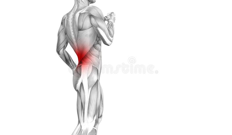 Back human anatomy hot spot inflammation articular joint pain or spine health care therapy or sport muscle con. Conceptual back human anatomy with red hot spot royalty free illustration