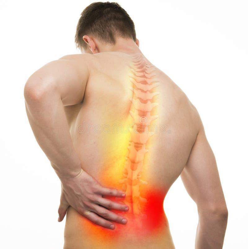 Back Injury Male Anatomy - Studio shot with 3D illustration isolated on white royalty free illustration