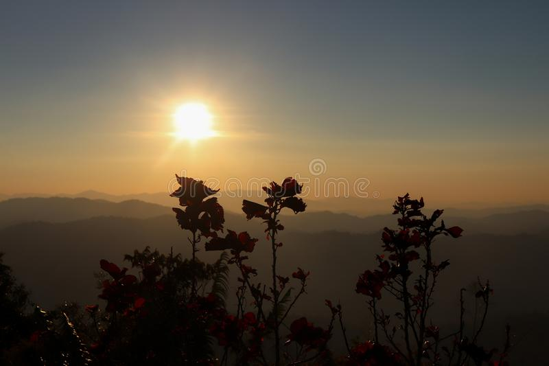 Back light flowers on mountain royalty free stock image