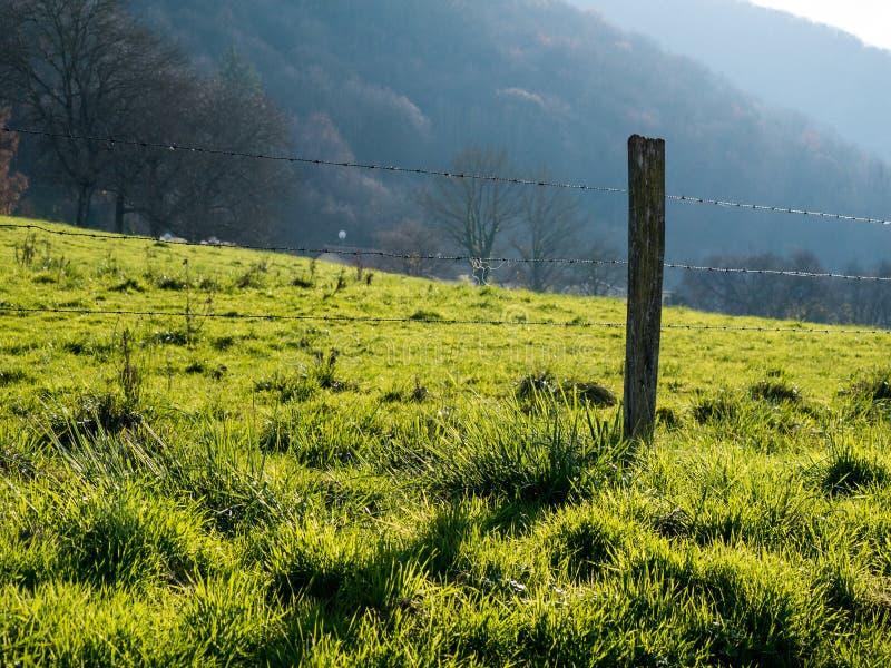 Back lit pasture stock photography