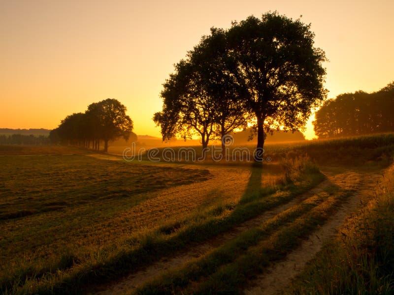 Back lit trees during sunrise. Back lit trees along a track during sunrise royalty free stock image