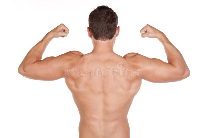 Download Back muscles stock image. Image of muscle, biceps, lifestyle - 17007529