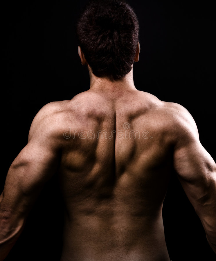 Download Back Muscles Of Big Healthy Naked Man Stock Photo - Image: 9023454