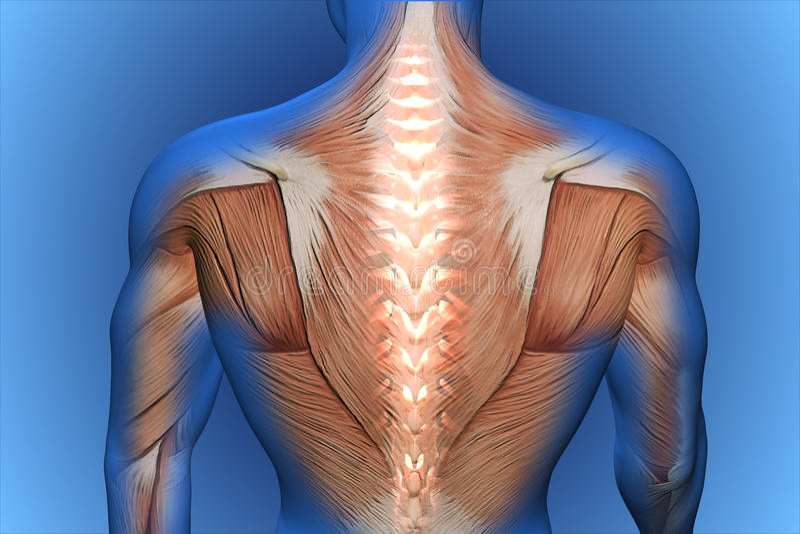 Back pain. 3d anatomical vision back pain royalty free illustration