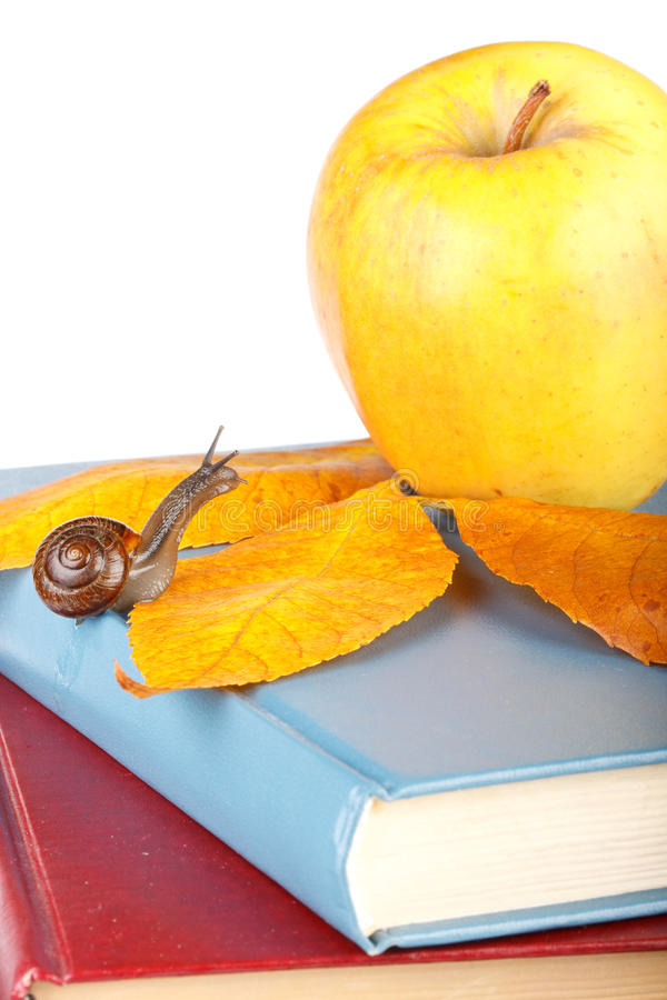Back to school. The garden snail, books and apple on a white background. Back to school stock photo