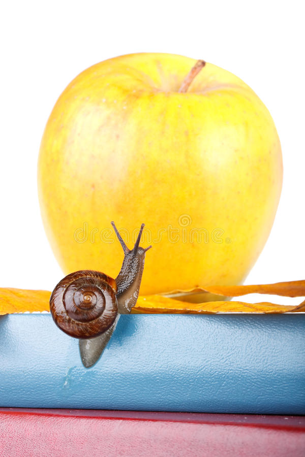 Back to school. The garden snail, books and apple on a white background. Back to school royalty free stock image