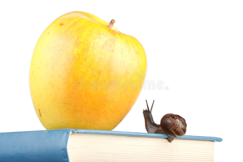 Back to school. The garden snail, books and apple on a white background. Back to school stock images