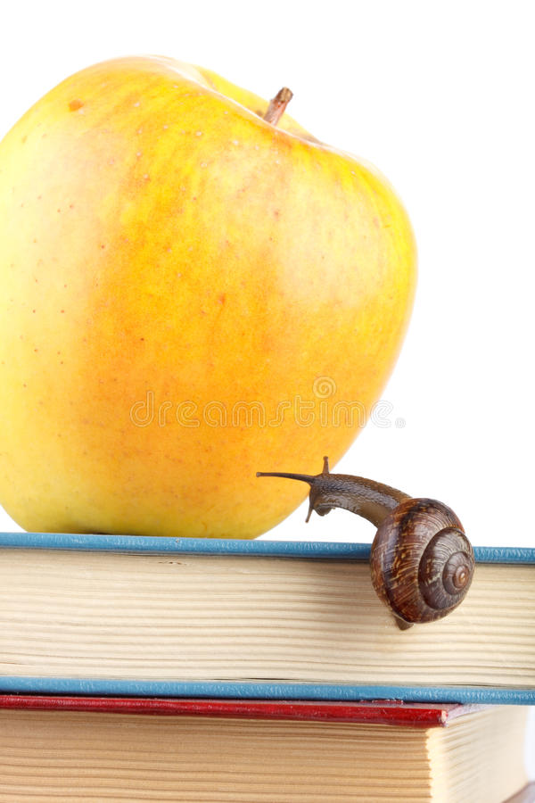 Back to school. The garden snail, books and apple on a white background. Back to school stock photography
