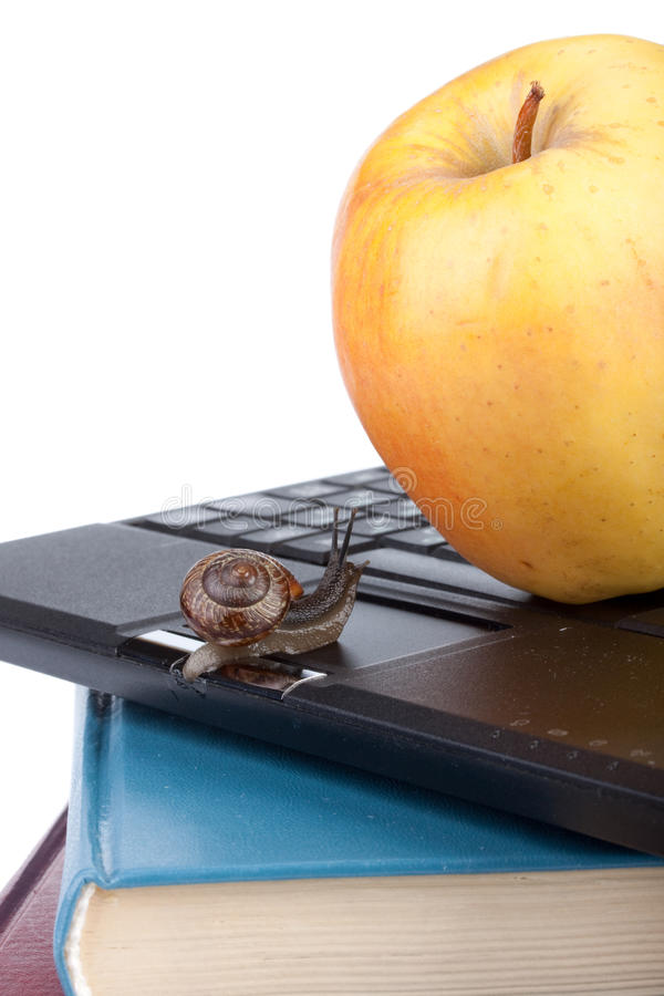 Back to school. The garden snail, notebook, books and apple on a white background. Back to school royalty free stock image