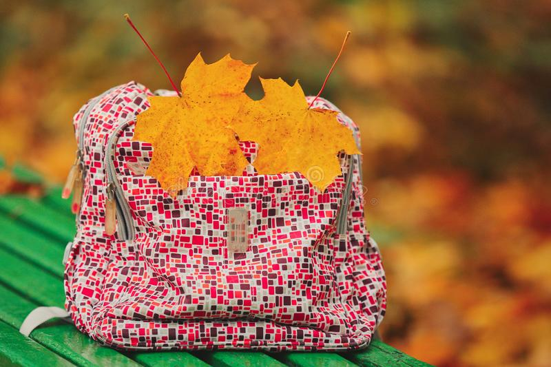 Back to school. autumn leaves. Red school backpack standing on green bench. two yellow maple leaves royalty free stock images