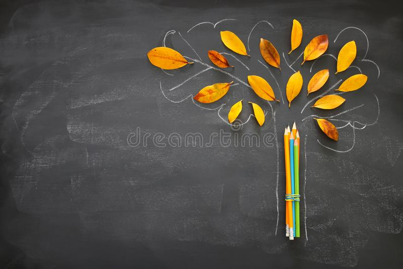 Back to school concept. Top view banner of pencils next to tree sketch with autumn dry leaves over classroom blackboard background stock image