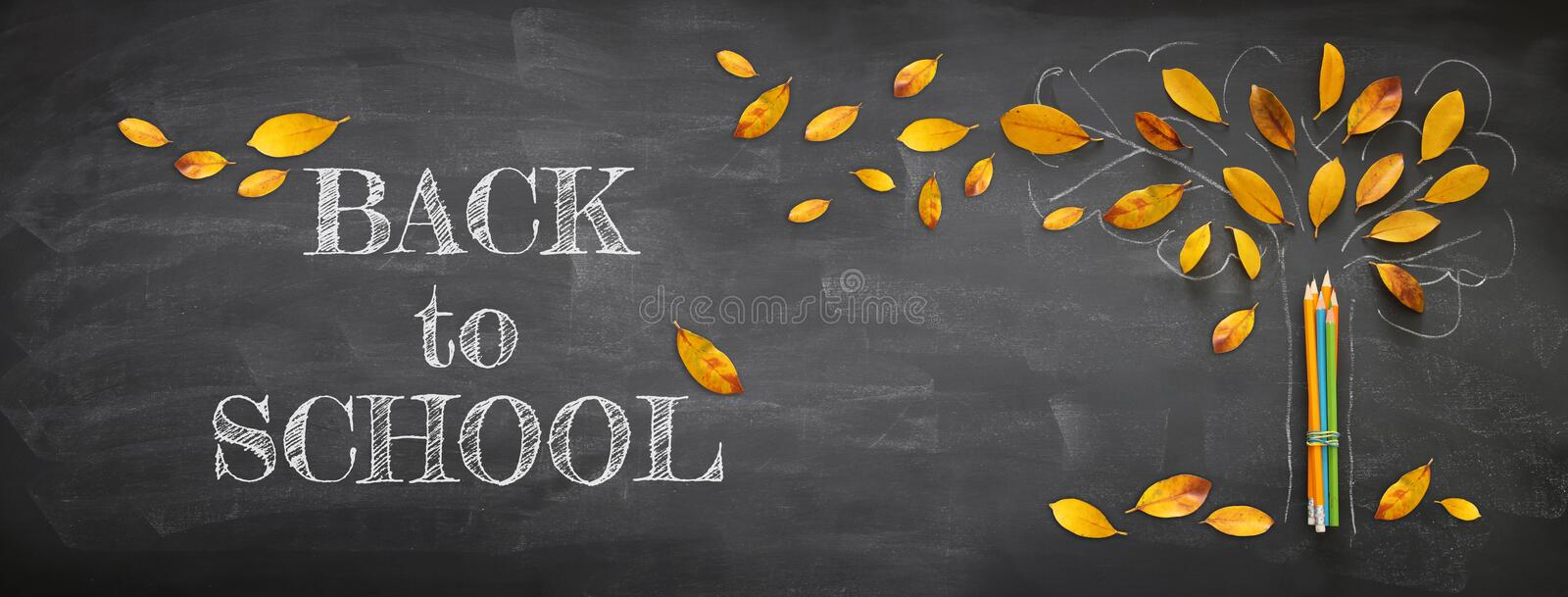 Back to school concept. Top view banner of pencils next to tree sketch with autumn dry leaves over classroom blackboard background vector illustration