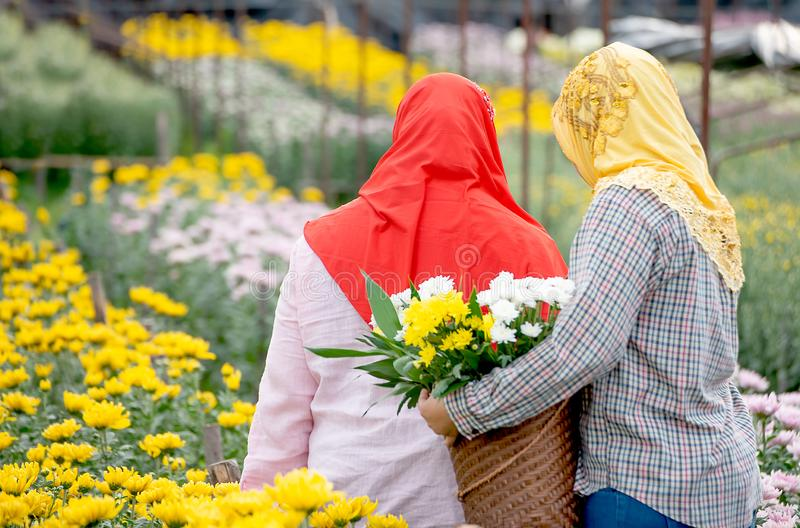 The back of two Muslim worker girls are collecting the flowers in garden during day time with one girl wear red hijab and the stock photography