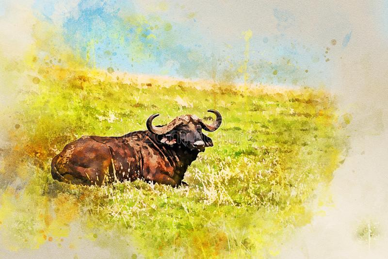 Back view of African buffalo in savannah royalty free stock image