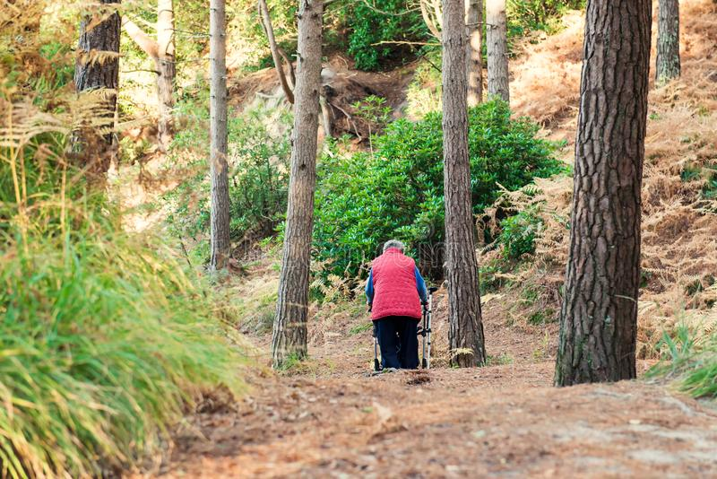 Back view Alone Disabled aged female person with walker during her walk in the forest, park. Selective focus, copy space royalty free stock images
