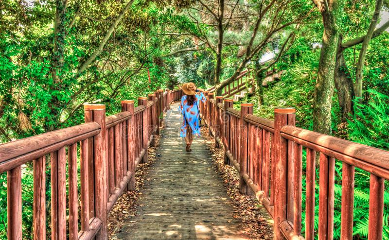 back view of female tourist walking on path in the forest royalty free stock photos