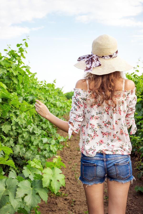 Back view of girl walking through vineyard with arms outstretched. Rear view of woman enjoying in her freedom in nature royalty free stock photography