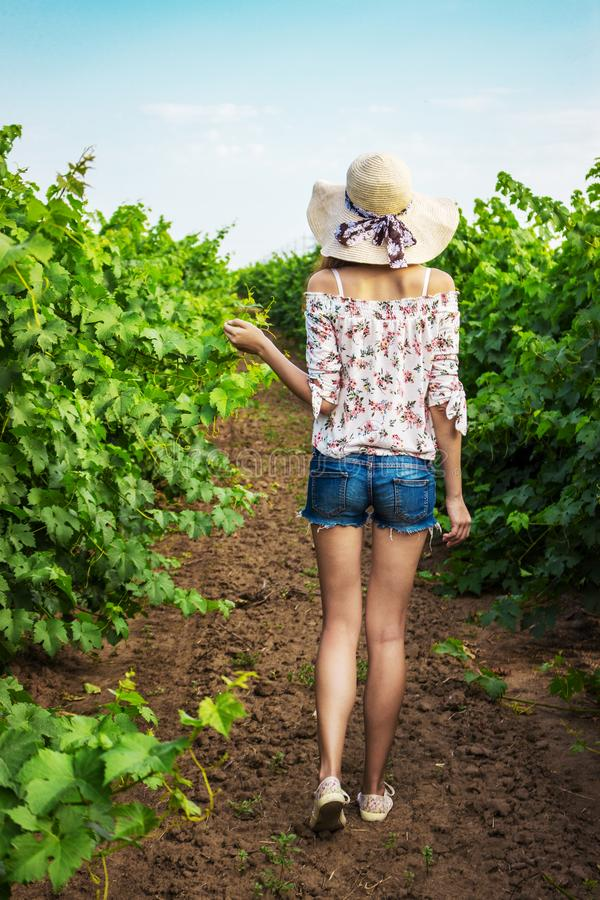 Back view of girl walking through vineyard with arms outstretched. Rear view of woman enjoying in her freedom in nature stock image