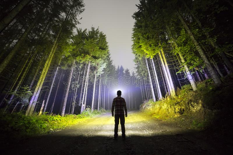 Back view of man with head flashlight standing on forest ground road among tall brightly illuminated spruce trees under beautiful royalty free stock image