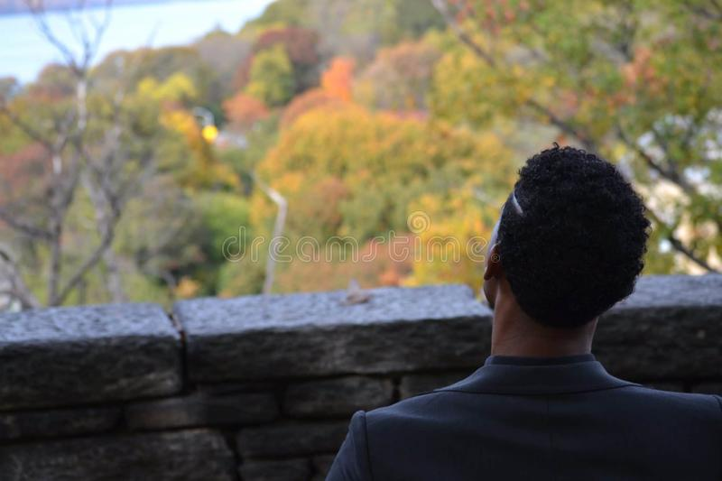 Back View of a Man Overlooking Autumn Treetops royalty free stock photo