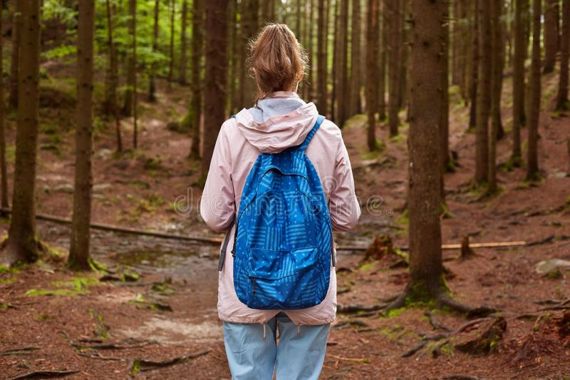 Back view of slim athletic tourist hiker girl withblue backpack walking through mountain pine forest. Female spending time in open royalty free stock photo