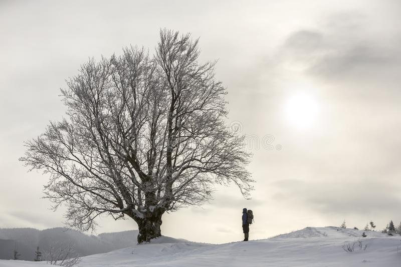 Back view of tourist hiker with backpack standing in white clean deep snow at big tree on background of woody mountains and cloudy royalty free stock photography
