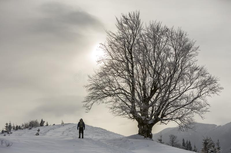 Back view of tourist hiker with backpack standing in white clean deep snow at big tree on background of woody mountains and cloudy stock images