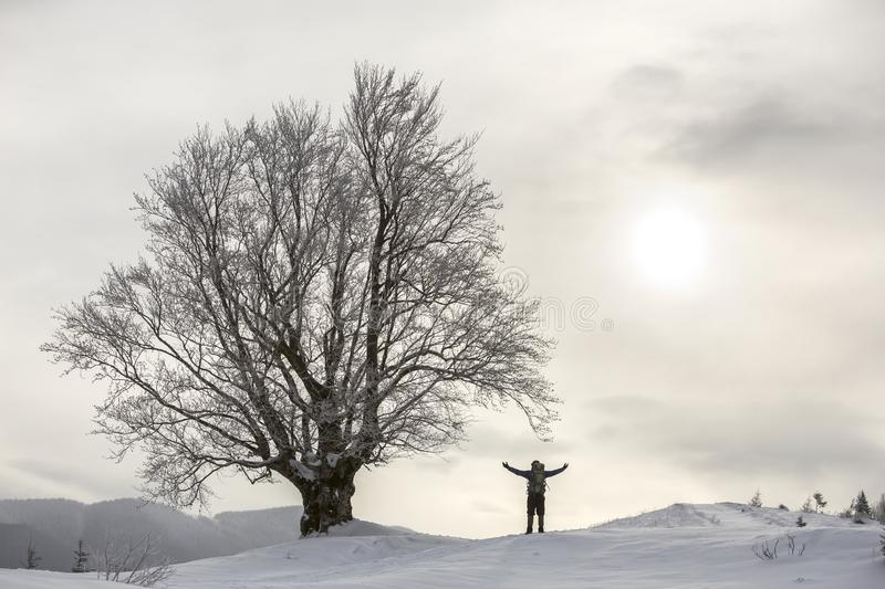 Back view of tourist hiker with backpack standing in white clean deep snow at big tree on background of woody mountains and cloudy royalty free stock photo