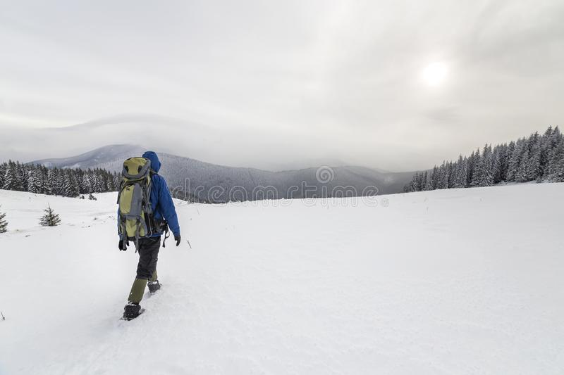 Back view of tourist hiker in warm clothing with backpack walking upward mountains covered with snow on spruce forest and cloudy stock photos