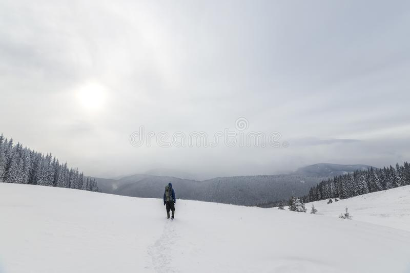 Back view of tourist hiker in warm clothing with backpack walking upward mountains covered with snow on spruce forest and cloudy stock images