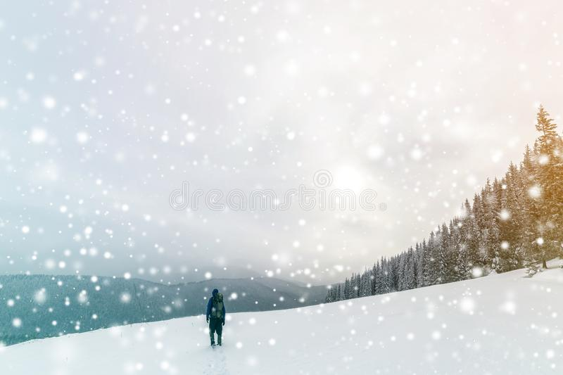 Back view of tourist hiker in warm clothing with backpack walking upward mountains covered with snow on spruce forest and cloudy royalty free stock photo