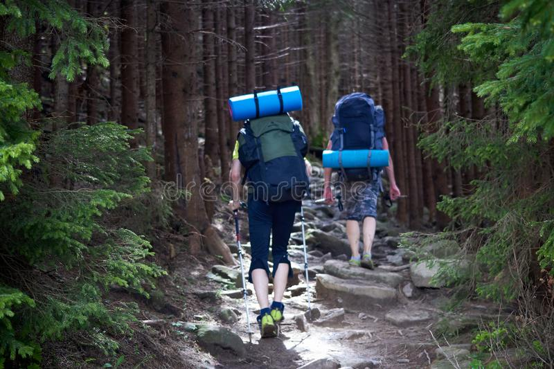 Back view of tourists with backpacks are climbing by a rocky trail in a mountain forest. stock photo