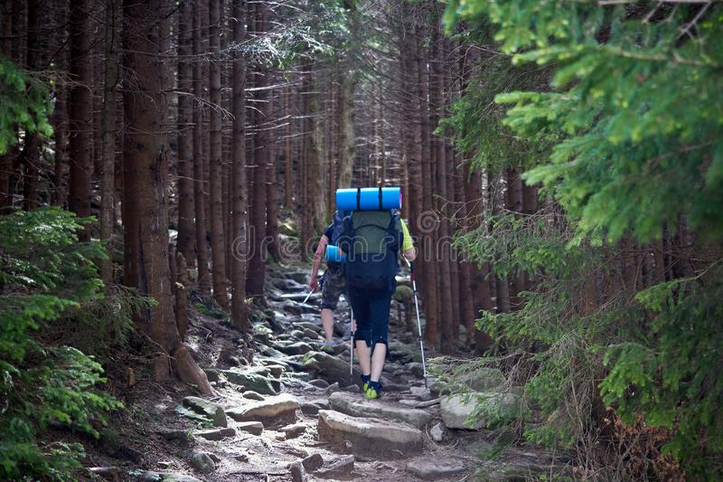 Back view of tourists with backpacks are climbing by a rocky trail in a mountain forest. royalty free stock image