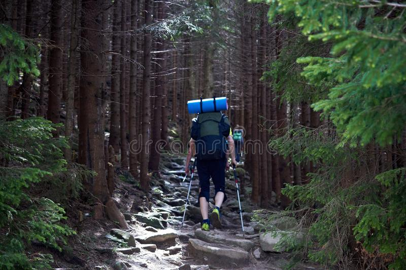 Back view of tourists with backpacks are climbing by a rocky trail in a mountain forest. stock photos