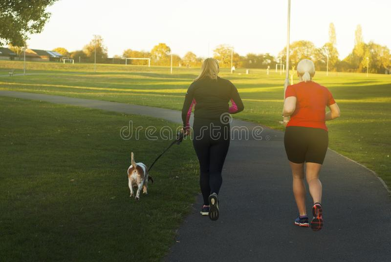 Back view of two women and a little dog, going on a jogging in a public park on a sunset. royalty free stock images