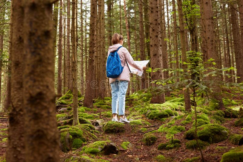 Back view of woman tourist walking in forest, holding map, trying to find right way in wood, having blue backpack, wearing pink royalty free stock photos