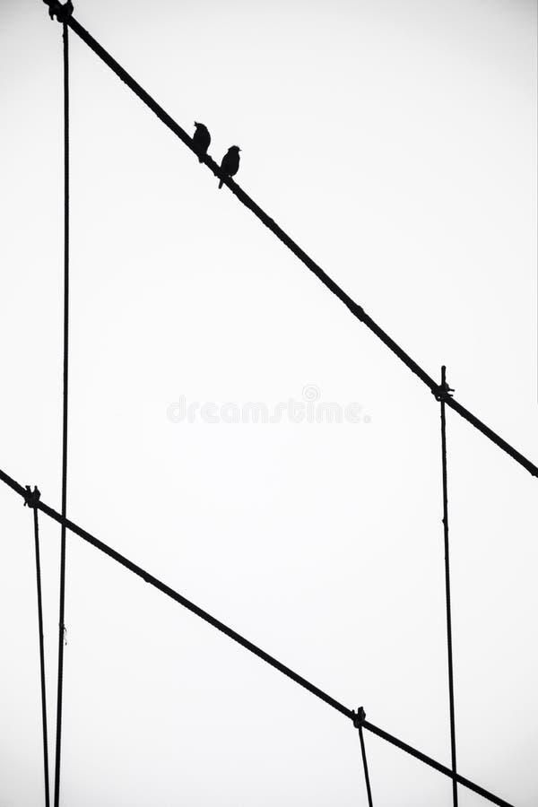 back&white da arte do querido dos pássaros foto de stock