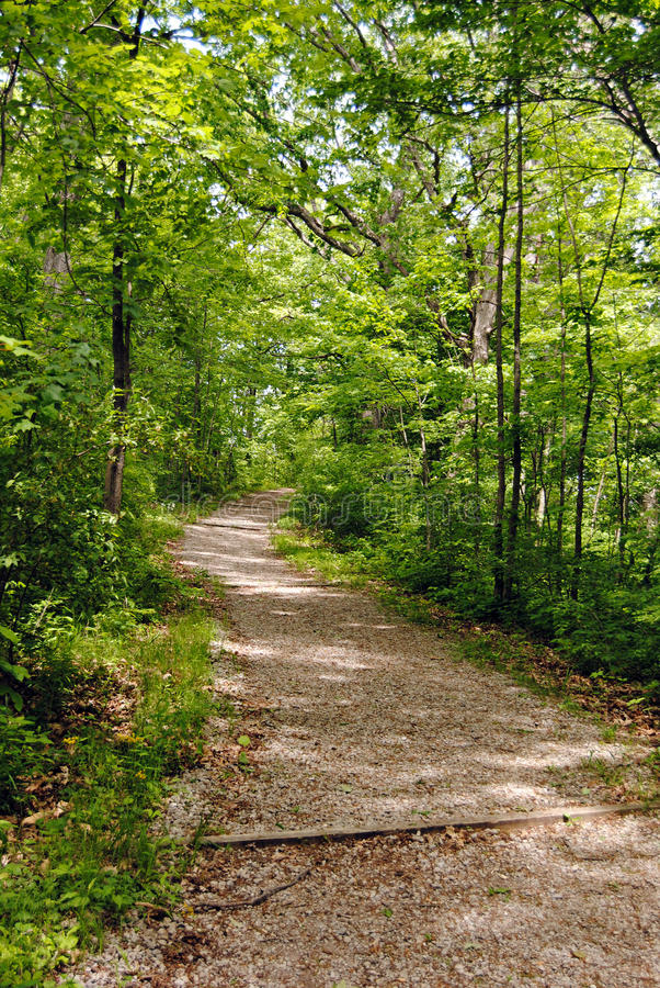 Back woods trail stock images