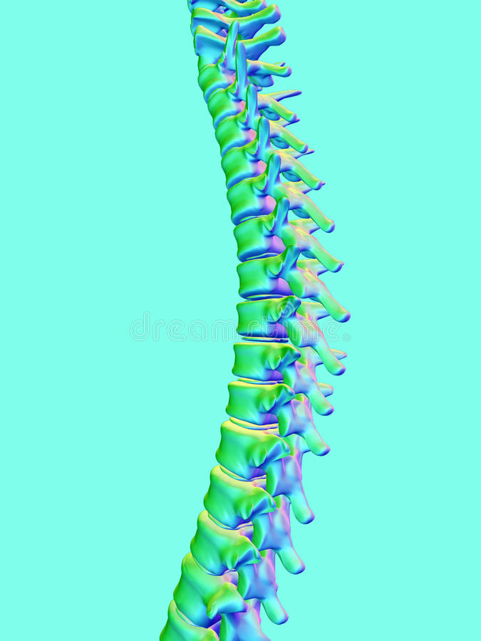 Backbone. 3d illustration backbone on a blue background royalty free illustration