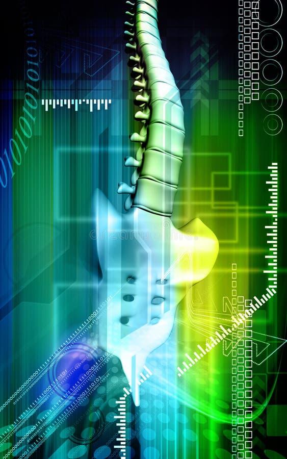 Backbone. Digital illustration of a backbone in colour background stock illustration