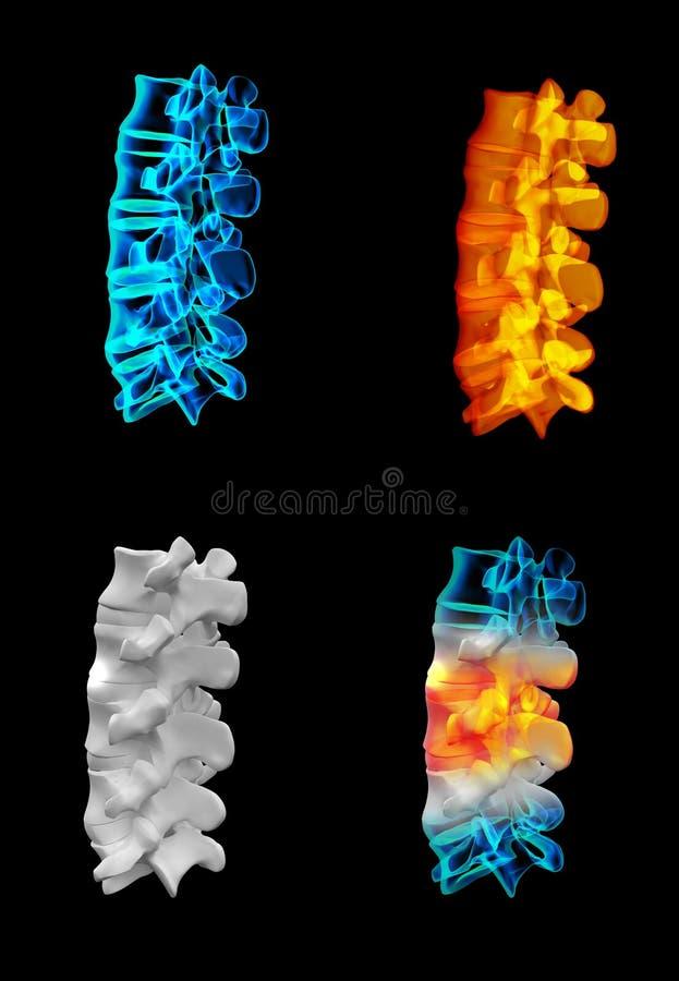 Backbone. 3D rendering human with the backbone stock illustration