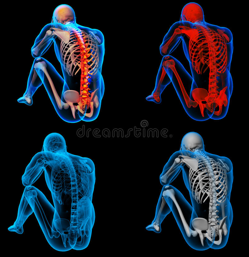 Backbone. 3D rendering skeleton of the man with the backbone stock illustration