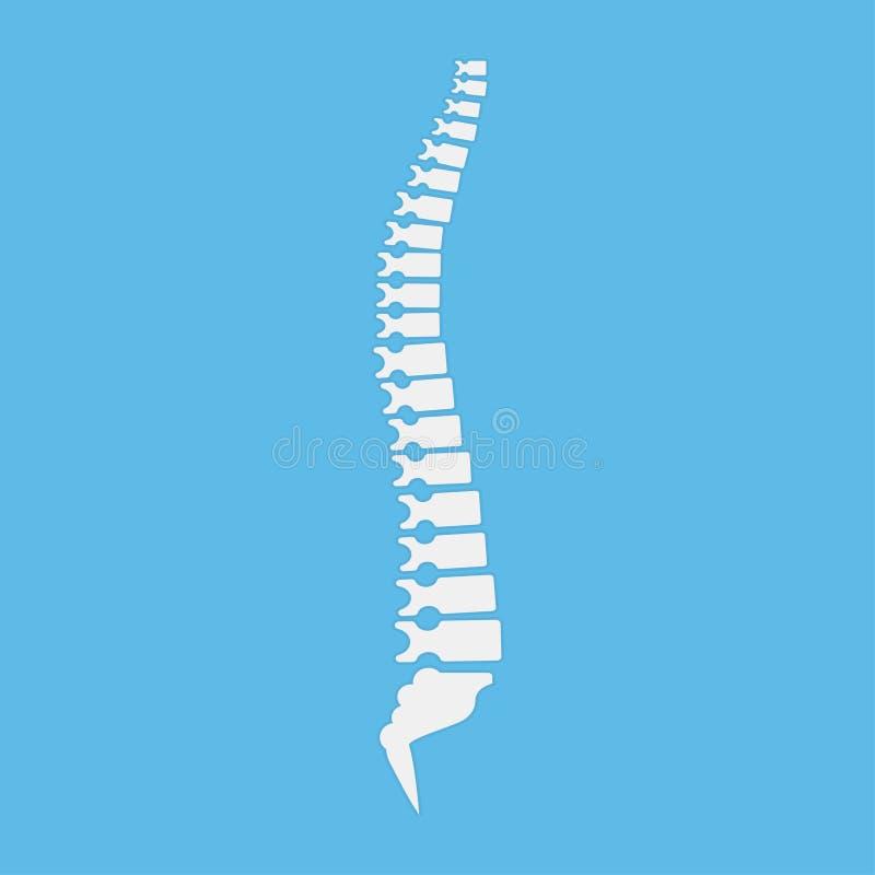 Backbone icon, human spine template. Vector illustration. Backbone icon, human spine template. Vector vector illustration