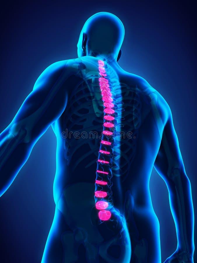 Backbone Intervertebral Disc Anatomy. Illustration. 3D render stock illustration