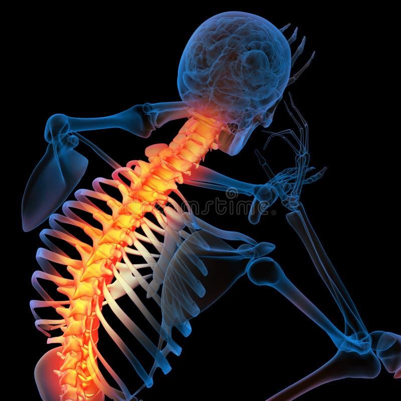 Backbone. Skeleton of the man with the backbone vector illustration