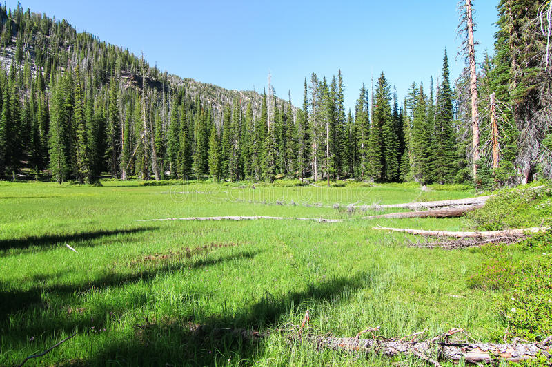 Backcountry Meadow in the Eagle Cap Wilderness, Oregon, USA royalty free stock photography